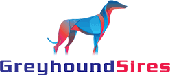 Greyhound Sires